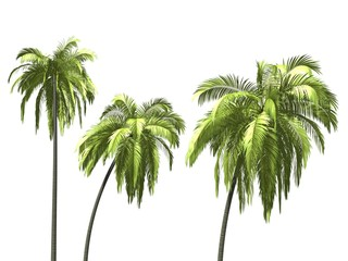 Palmtrees over white