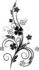 Blume, Ranke mit Klee, Glücksklee, Kleeblatt