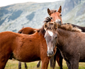 young horses in a mountain