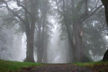 Düstere Baumallee im Nebel