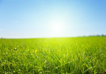 green field of grass