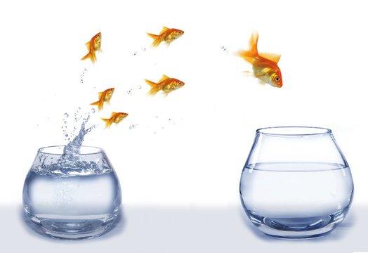 jump gold fish from aquarium to aquarium