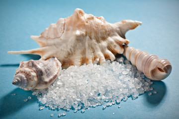 Three sea shells with dead sea salt on blue