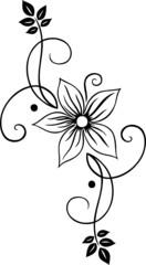 Blume, Blüte, Ranke, filigran, floral, ornamental