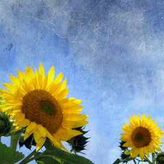 sunflowers on grungy background