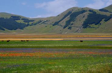 Castelluccio di Norcia. I Colori della Natura..
