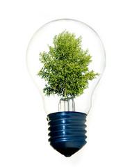 Tree in eco light bulb