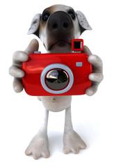 Chien avec un appareil photo