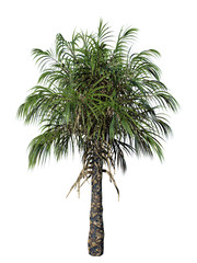 Realistic Illustration of palm tree