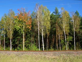 Autumn trees near the railway embankment.
