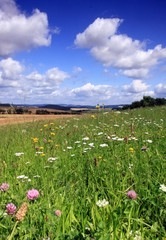 Flowering grassland with view of Czech landscape