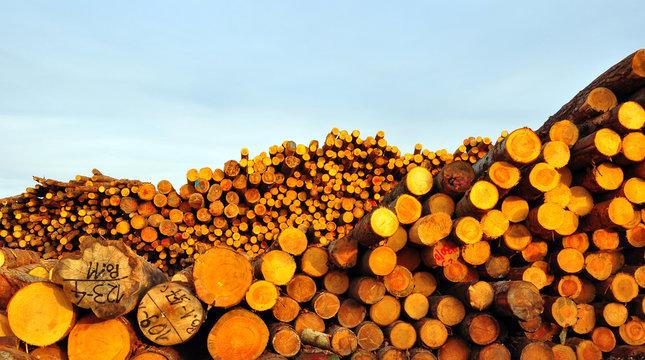 A huge assortment of trunks shot at a sawmill