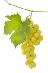 uva moscata bianca foglia grappolo