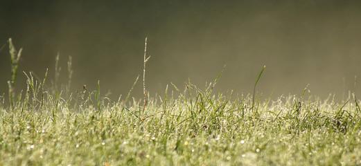 Mist and green grass