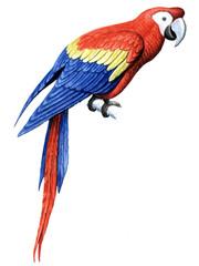 Bird Parrot Macaw