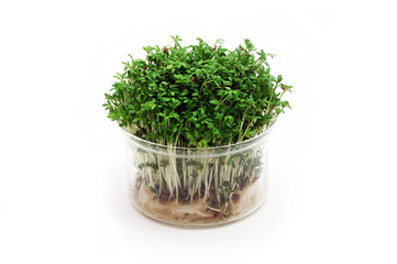 Fresh cress in the glass