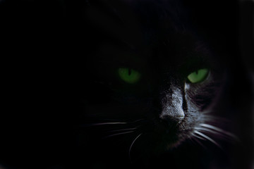 Green cat's eyes in the dark