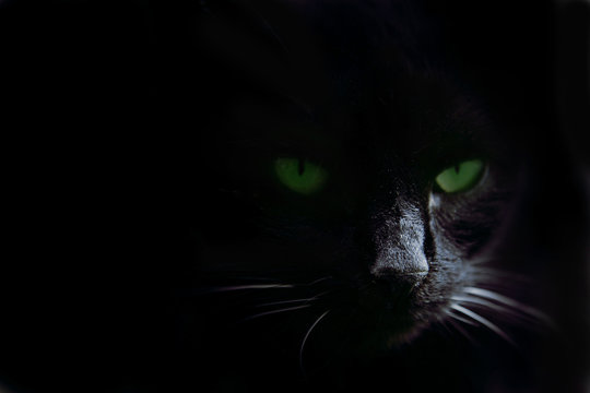Green cat's eyes in the dark