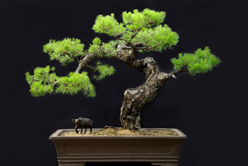 Photo sur Aluminium Bonsai potted landscape