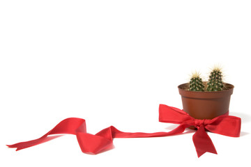Cactus in orange decorative pot with red bow
