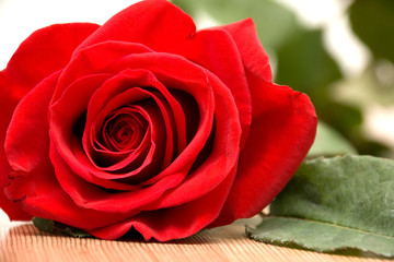 Single Red Rose on Wooden Surface