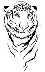 Tiger linear