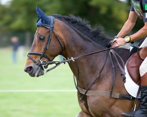 Horse Trial Gallop