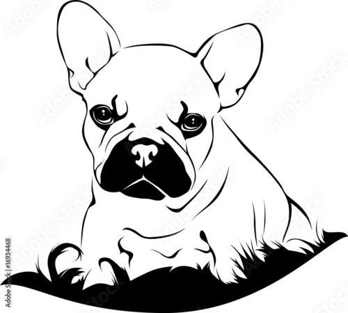 32 ausmalbilder französische bulldogge  besten bilder von