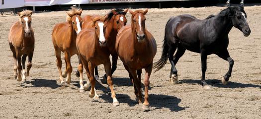 6 Horses Running
