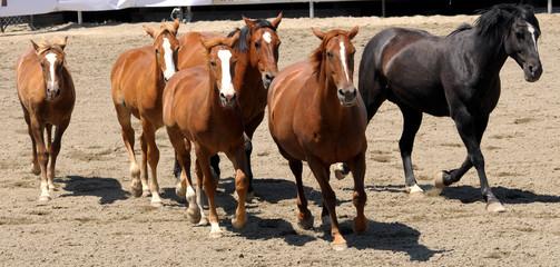 6 Horses