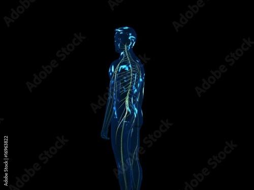 Search photos vertebralis