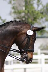 Dressage horse head shot