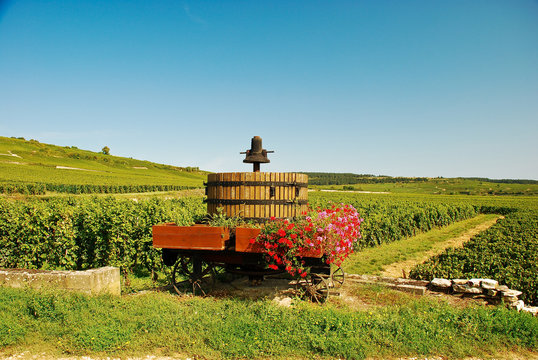 Bourgogne, le vignoble près de Pommard