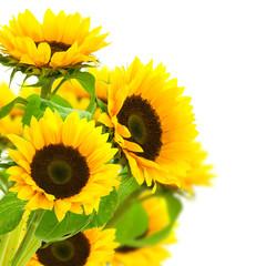 image d'une fleur de tournesol isolé sur fond blanc