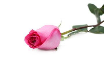 Rose in drop of water