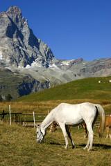 Cervino e cavallo
