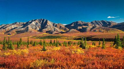Spoed Fotobehang Rood traf. Denali National Park in autumn