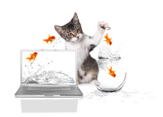 Kitten Pawing at Gold Fish Jumping out of Water