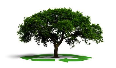 symbole recyclage sous un arbre - recycler isolé sur blanc