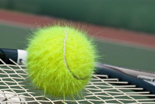 Shaggy tennis ball on a racquet