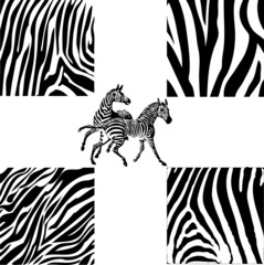 Zebra Collage (Vector)