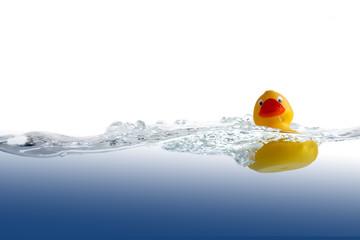Rubber Duck In Water