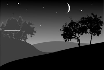 trees under night sky with stars
