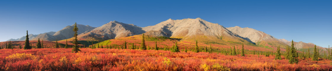 Photo sur Plexiglas Brique Alaska autumn Tundra Denali National Park