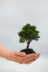 woman holding a small tree in her hands