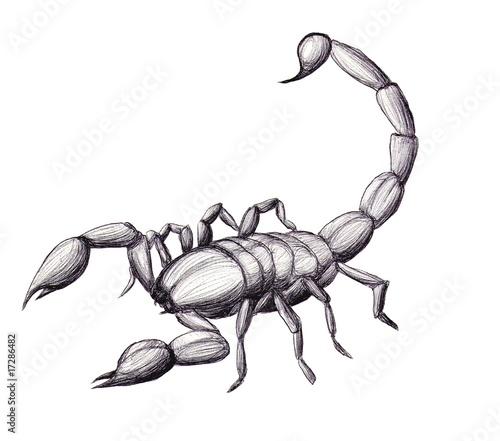 Skorpion Stockfotos Und Lizenzfreie Bilder Auf Fotolia Com Bild