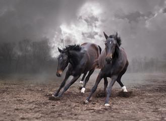 Horses of a twilight
