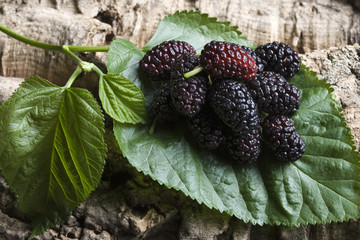 mulberry on leaf