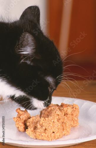 Une chatte poilue manger pour un nain - Poilue Pornovore