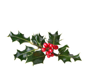 Holly Leaf Sprig with Red Berries